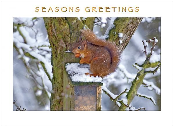 Squirrel Christmas Card
